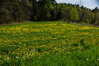 Field off of Austin House Road