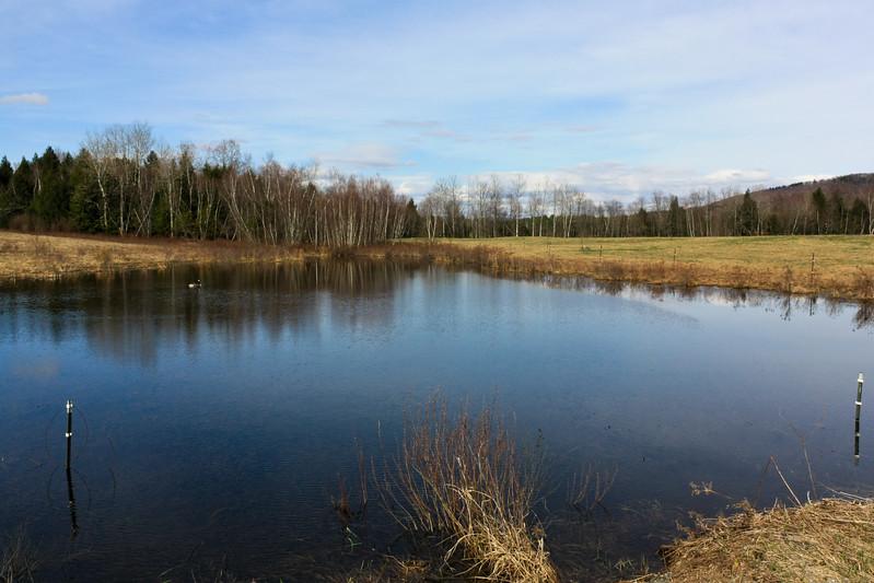Flooded Pond on Plains Road