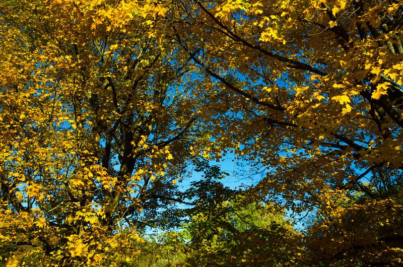 Foliage Peak 2