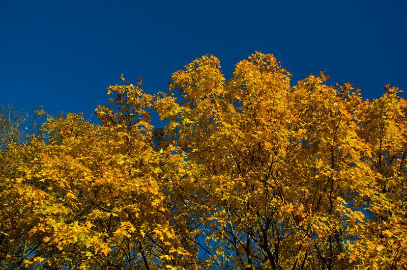 Foliage Peak