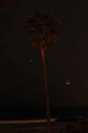 """Prescent Moon and Lone Palm""."