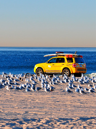 """""""Breakfast Flock"""".   Image published on the Front Cover of the """"South Bay Monthly"""" Magazine, April 2011 (Manhattan Beach, Hermosa Beach, Redondo Beach & El Segundo Issue)."""