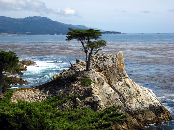"""The """"Lone Cypress"""". As one of California's most enduring landmarks, the Lone Cypress has been perched on this rock for over 250 years.  Pebble Beach, CA."""