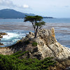 "The ""Lone Cypress"". As one of California's most enduring landmarks, the Lone Cypress has been perched on this rock for over 250 years.  Pebble Beach, CA."