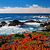 Fire and Ice.  Ice plant flourishing, Big Sur Coastline.