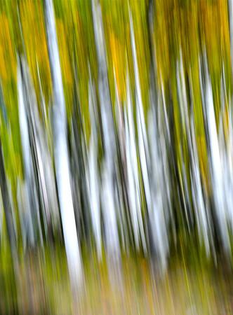 """Vertical Lines"".  Boulder Mt. Utah"