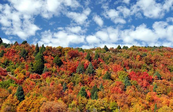 Logan Canyon, Utah. Fall colors 2008.