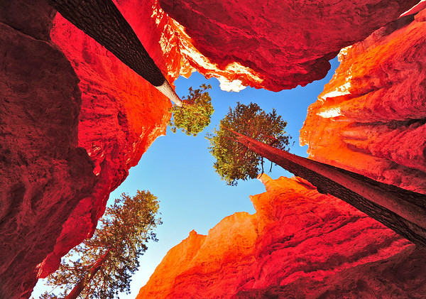 """Vertical Limits"", Bryce Nat. Park"