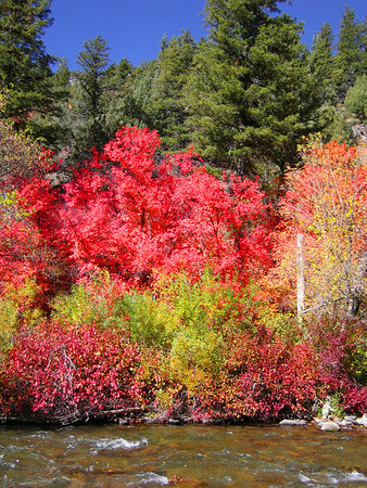 Along the river in Logan Canyon. Logan Canyon, Utah.