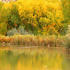 Fall reflections, Boulder Mt., Utah.