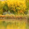 Fall reflections, Boulder Mt., Utah.