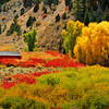 Red barn surrounded by fall colors, Hwy 191, Utah.