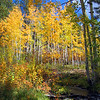 Fall colors and creek, Boulder Mt., Utah