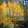 Fall colors and creek, Boulder Mt., Utah