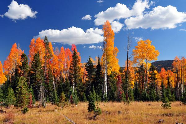 DSC_9858 off road, fall colors