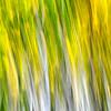 """""""Fall Pastels"""". Boulder Mt., Utah"""