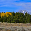 Blocks of fall color, outside Jackson Hole, WY.