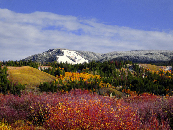 Fall colors at it's peak! Outside of Jackson Hole, WY.