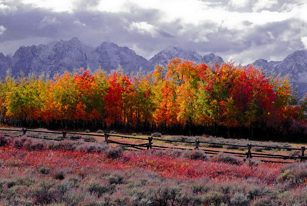 Fall colors stacked against Grand Teton National Park, WY.