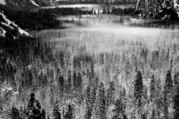 Fog in Yosemite Valley. Yosemite National Park
