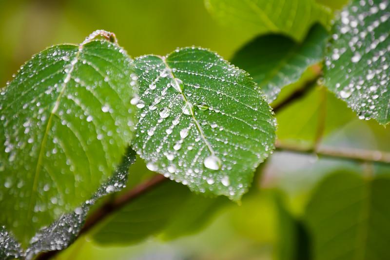 During Rainy Seasons