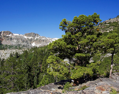 Tree line views Desolation Valley Sierra Nevada Mountains, California