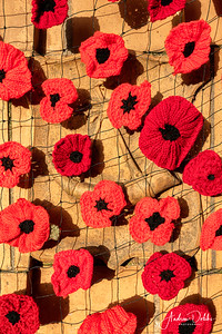 Poppy display on the gates of Ripon's Spa Gardens for this year's Remembrance