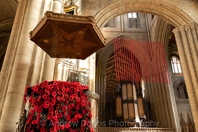 Cascades of poppies in Ripon Cathedral for this year's Remembrance
