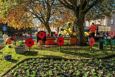 Poppies made by Jennyruth Workshops being put in place in Ripon for this year's Remembrance