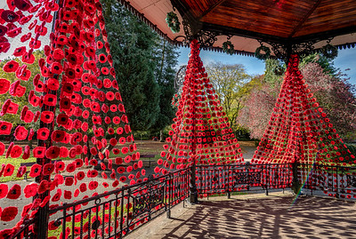 Poppy display in Ripon's Spa Gardens for this year's Remembrance
