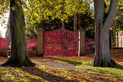 Poppy display on the gates of Ripon's Spa Park for this year's Remembrance