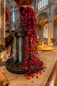 Cascade of poppies from the Pulpit of Ripon Cathedral as part of this year's Remembrance display