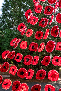 Poppy display on the bandstand in Ripon's Spa Gardens for this year's Remembrance