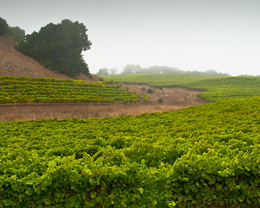 Rodgers Creek Vineyard