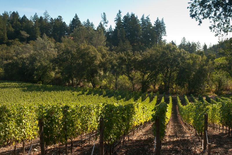 Vineyard Soldiers Landscape