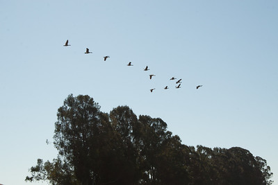 Migration time