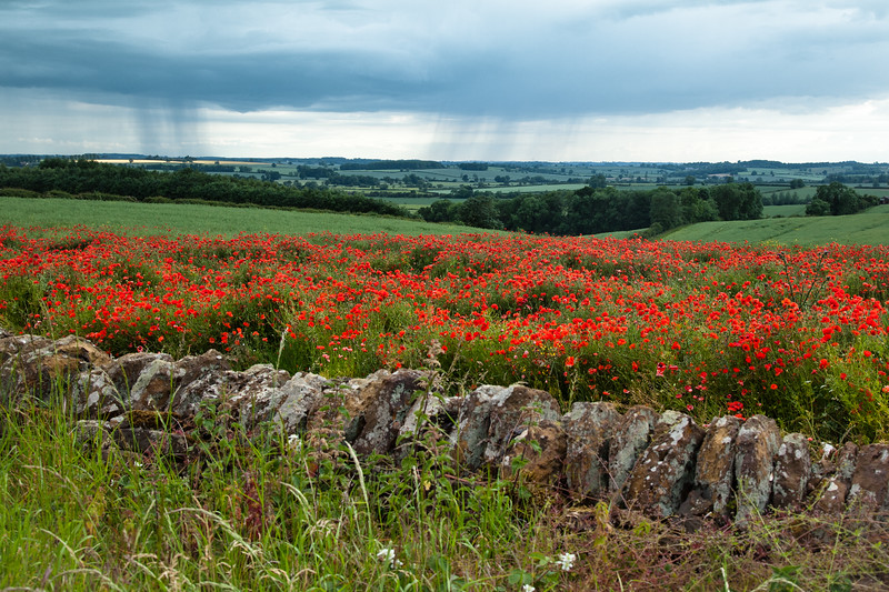 poppies showers brixworth-2485