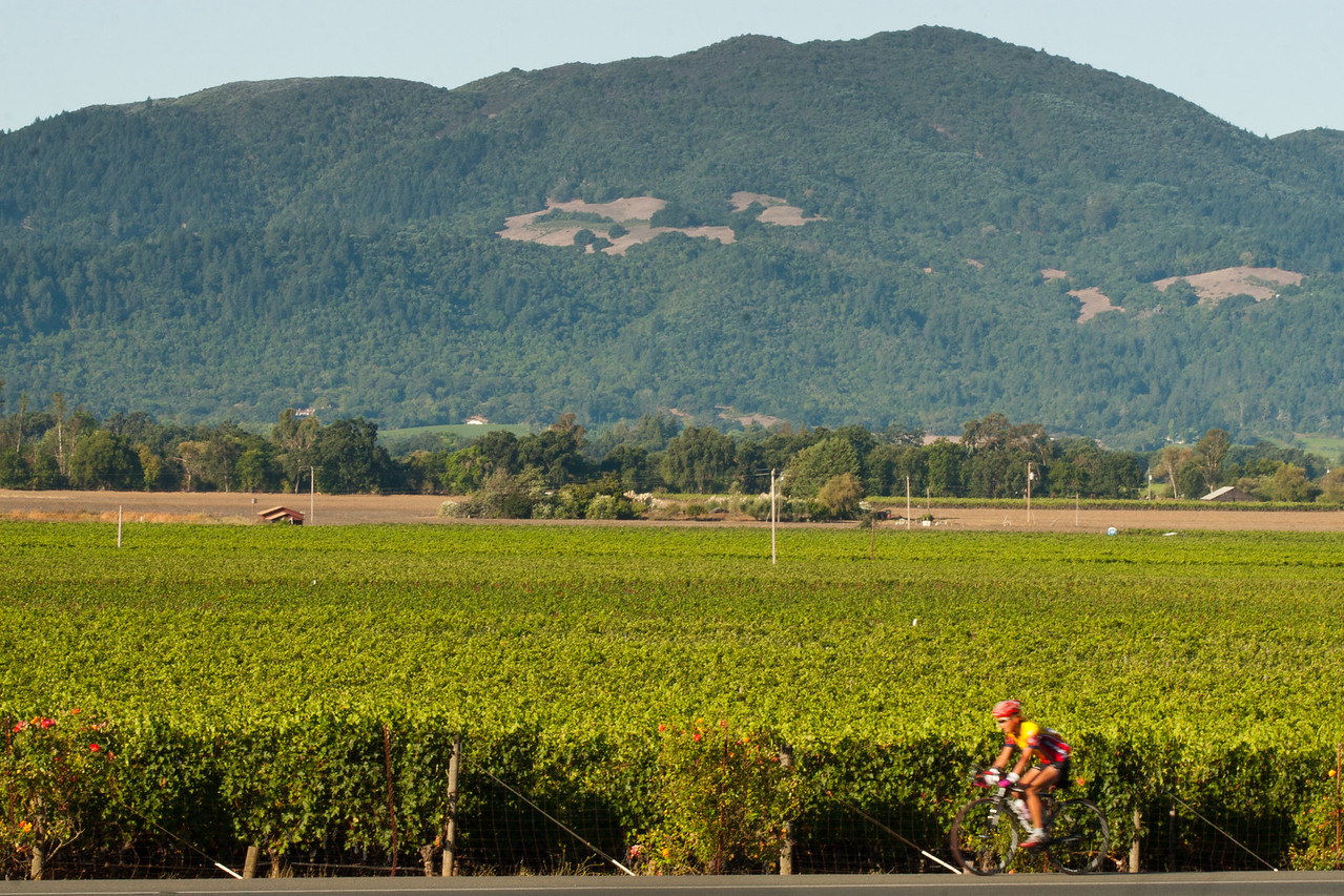 Cyclist and Vines