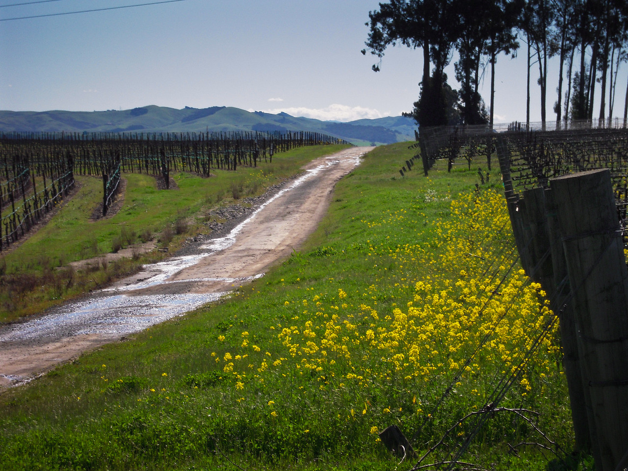 Spring in Carneros