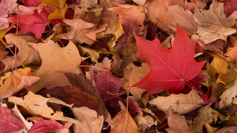 Farewell Autumn