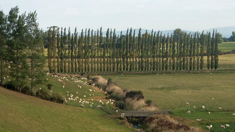 Kiwi Pastoral
