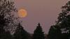 Jersey Harvest Moon