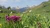 Wildflower Capital