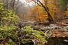 Autumn Fades at Ramapo