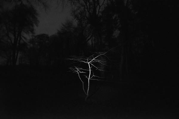 """sleeping tree"""