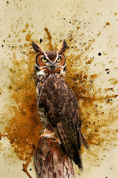 Great Horned Ow
