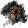 Grey Wolf - square forma