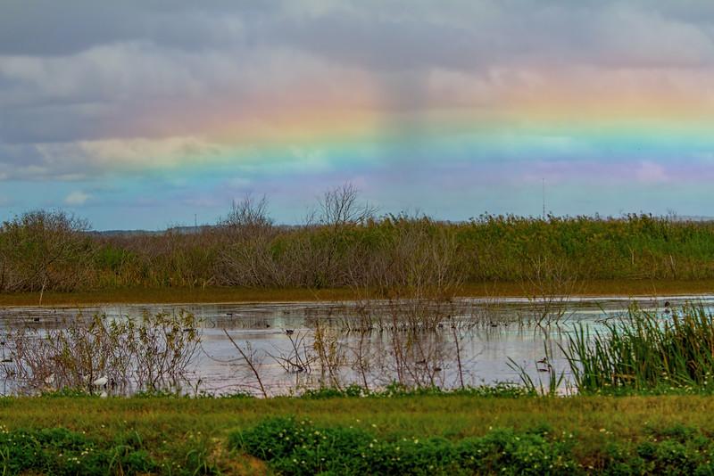 rainbow hangs low in the sky over the wetlands