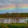 rainbow hangs low in the sky over the wetlands