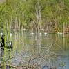florida's wetland